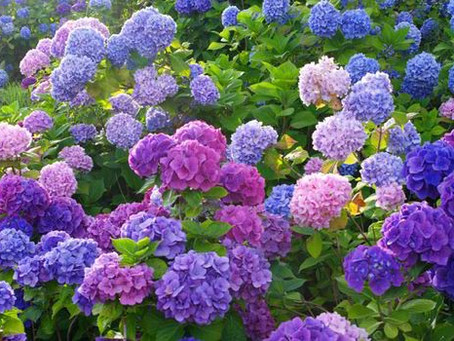 The Horti's Gardening Calendar - July