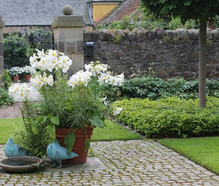 Courtyard Garden Broadwodside