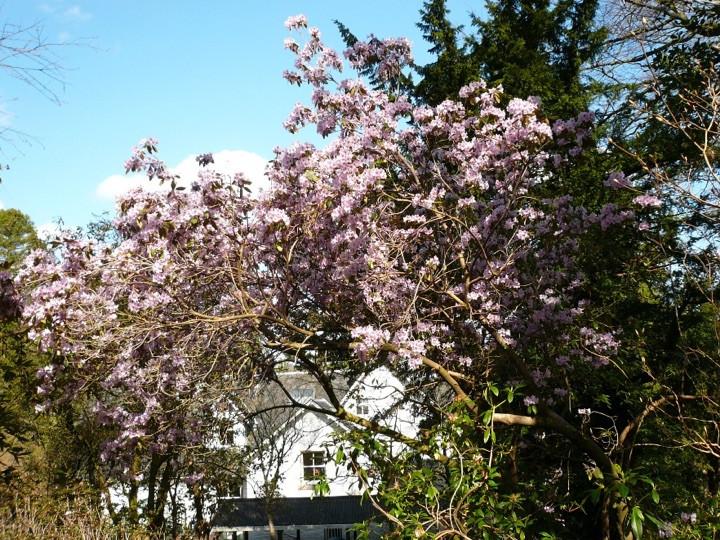 Garden at Kilarden