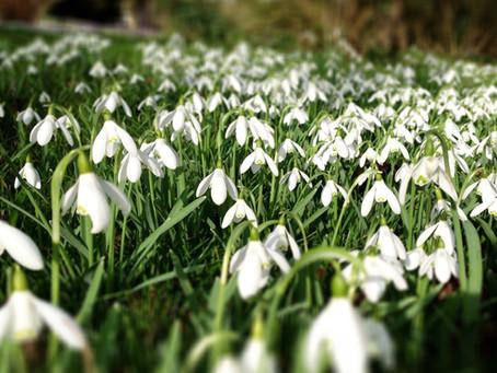 The Horti's Gardening Calendar - February