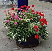 station flowers.jpg