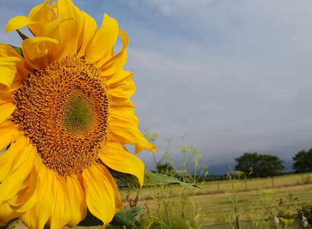 The Horti's Allotment - July
