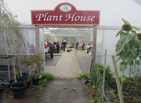 The Horti's Local School Bulb Competition
