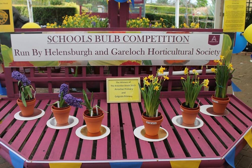 Schools' Bulb Competition