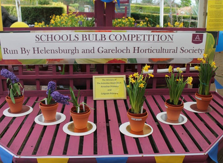 Local Schools' Bulb Competition