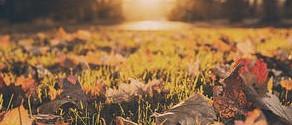 The Horti's Gardening Calendar- October
