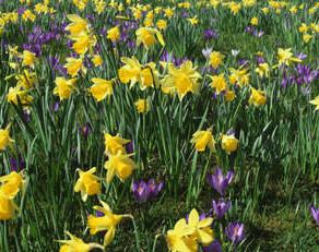 The Horti's Gardening Calendar - March