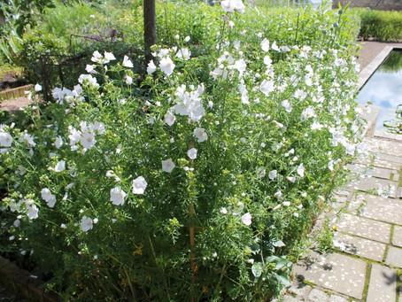Broadwoodside Garden and Smeaton Nursery - Summer Outing July 2017