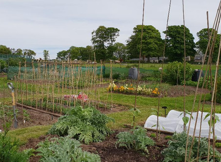 The Horti's Allotment - May