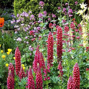 The Horti's Gardening Calendar - June