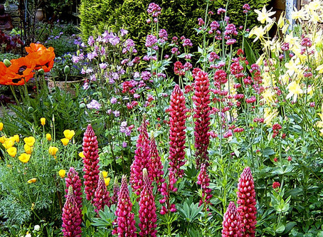 The Horti's Gardening Calendar - June