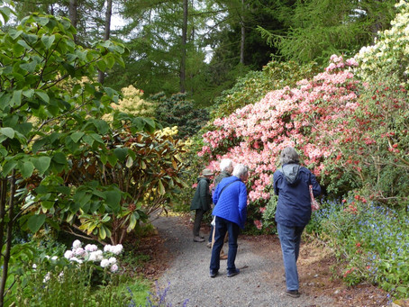 Glendoick House Gardens – Summer Outing May 2017