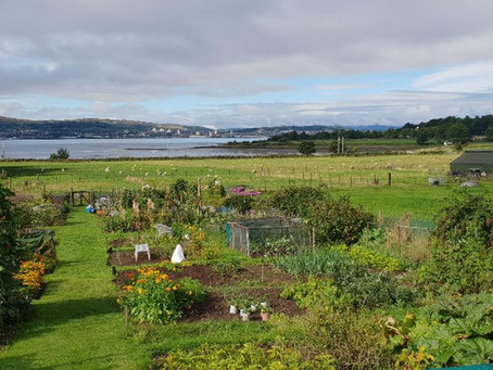 The Horti's Allotment - August