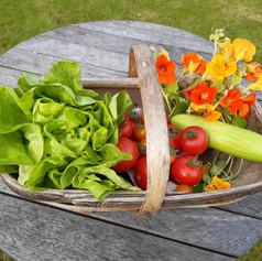 Winner - Salad Collection Class