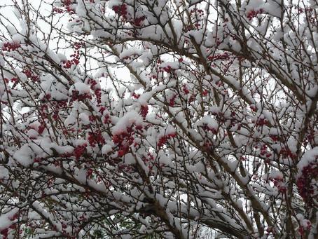 The Horti's Gardening Calendar - January