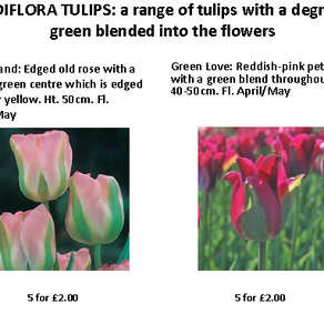 Bulb sale - order before 9th August!
