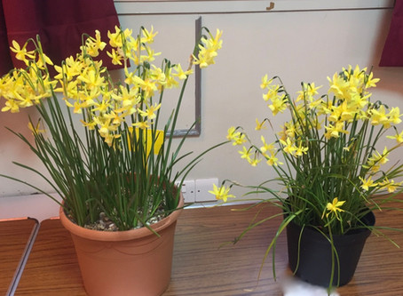166th Annual General Meeting and Spring Bulb Competition