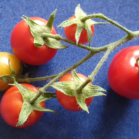 Runner up - Tomatoes Class