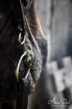 Adeline_Dupré_photographe_chevaux_yonne_auxerre-9370
