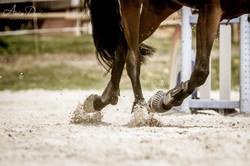 Adeline_Dupré_photographe_equestre-1776
