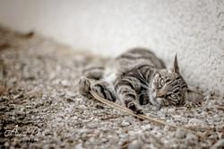 Adeline_Dupré_photographe_animaux_yonne_auxerre-0683