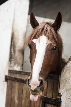 Adeline_Dupré_photographe_equestre-0953