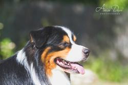 Adeline_Dupré_photographe_chien_Yonne-2840