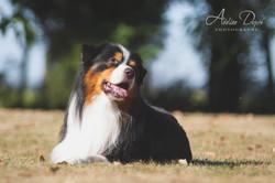 Adeline_Dupré_photographe_chien_Yonne-2745