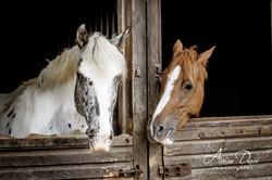 Adeline_Dupré_photographe_equestre_yonne_auxerre-8992