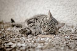 Adeline_Dupré_photographe_animaux_yonne_auxerre-0702