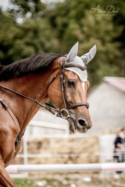Adeline_Dupré_photographe_equestre-1713