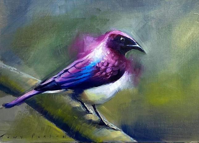 Purple Starling
