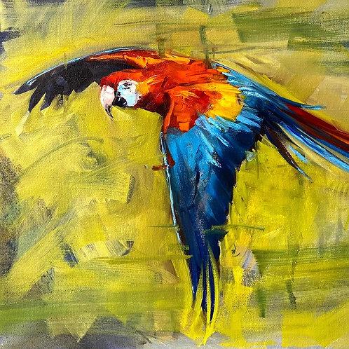 Parrot: Birds Painting Workshop