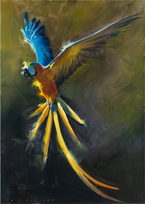 Macaw Yellow 42x60cm approx.