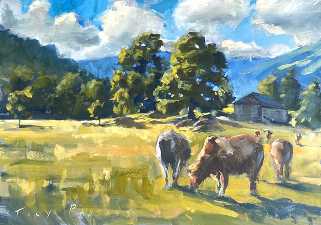 Ambleside Cows
