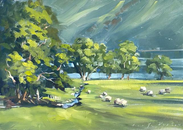 Bettermere Sheep
