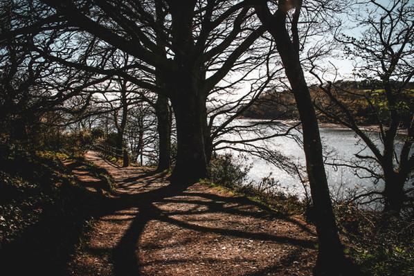 Trelisick Shoreside Woodland Walk
