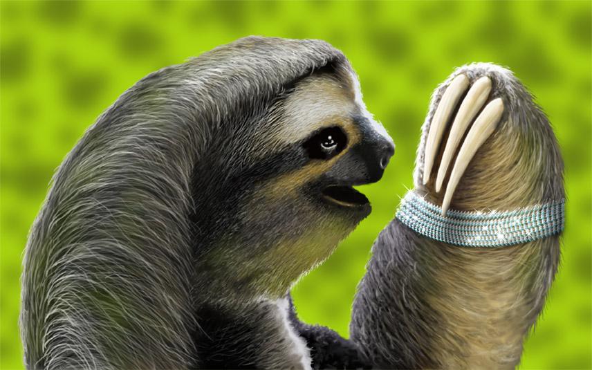 Sloth plus.jpg