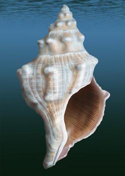Shell(72dpi).jpg