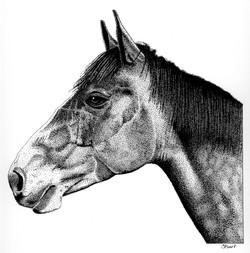 Horse-P & I(72dpi).jpg