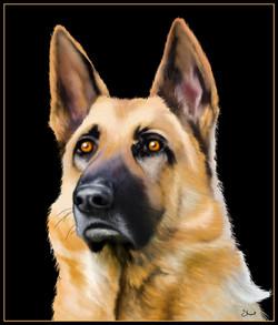 German Shepherd.jpg