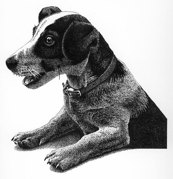 Dog-P & I(72dpi).jpg