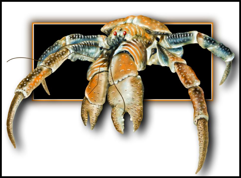 robber crab.jpg