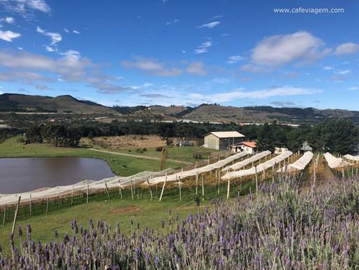 A Rota do Turismo de Vinho passando por TERMAS DO GRAVATAL