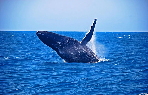 baleia-porto-seguro.jpg.webp