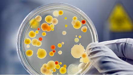 microbial testing.png