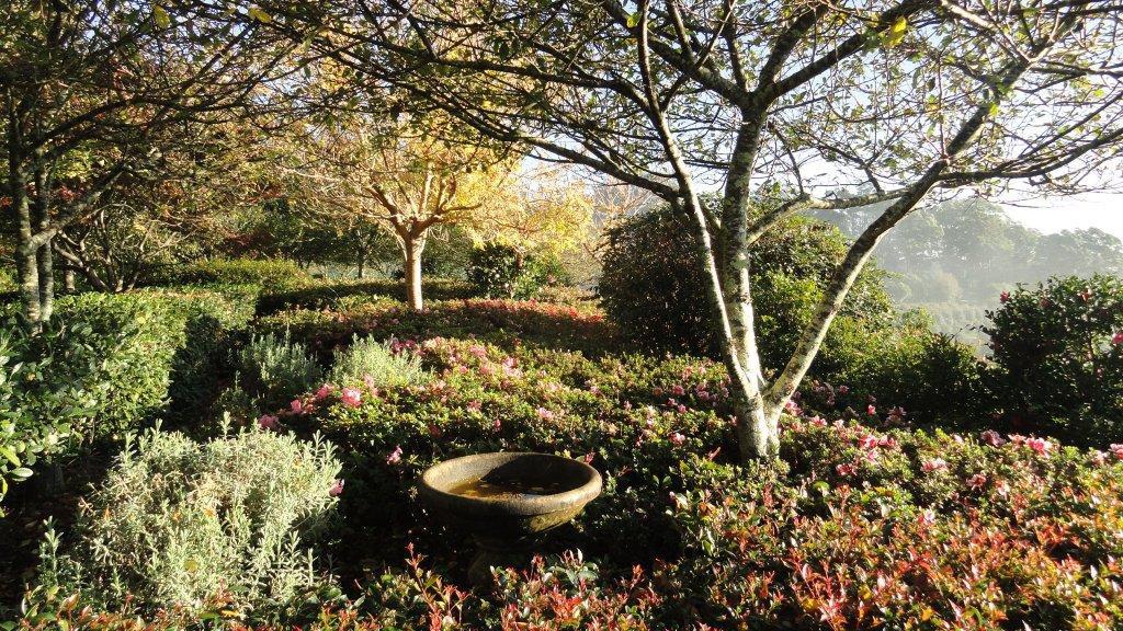 Garden with Tree Farm in Background.jpg
