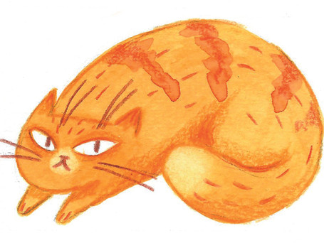 Visitenkatze orange