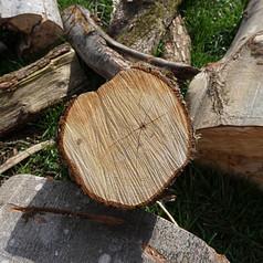 Holzstamm mit Rissen