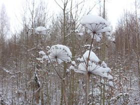 Schneehauben